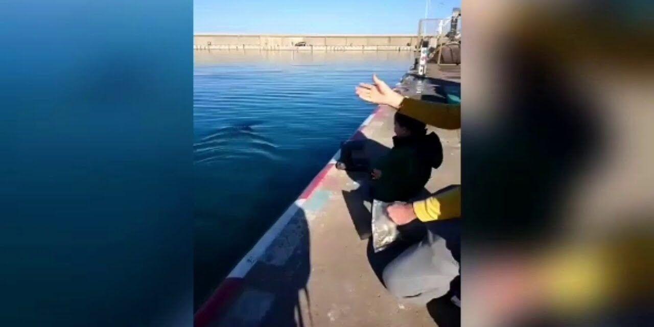Trini, el atún | Puerto de l'Escala, Girona